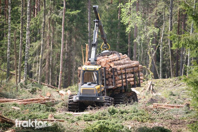 Den mullrande jätten i skogen