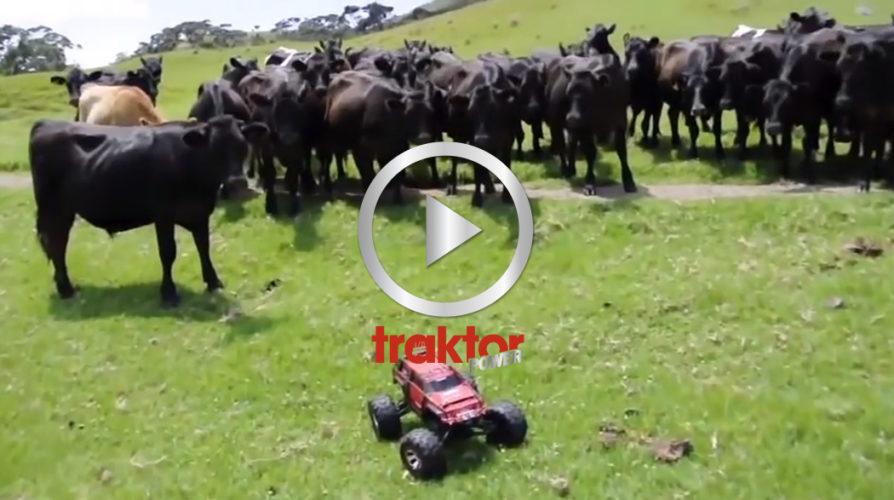 Så sköter du boskapen med fjärrkontroll!