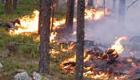 Skogsmässa långt från skogsbrand