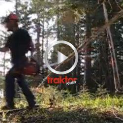 SPRING, trädet faller!!!