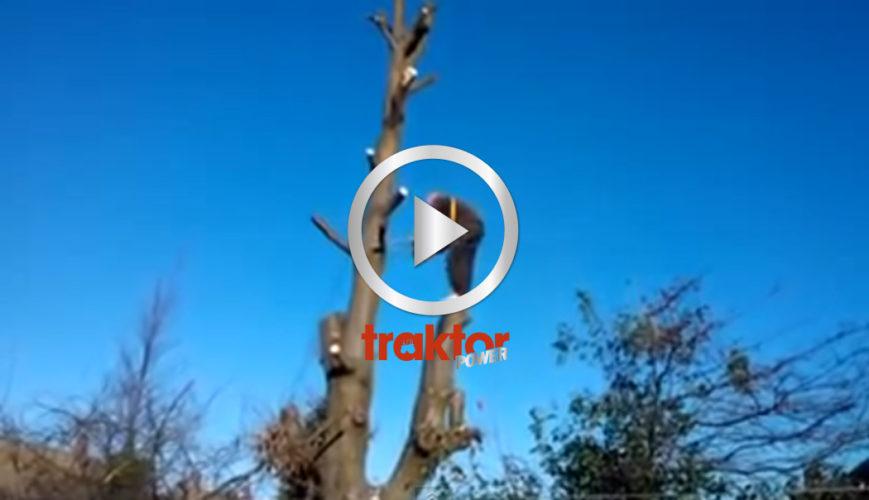 Proffsig trädfällare in action!