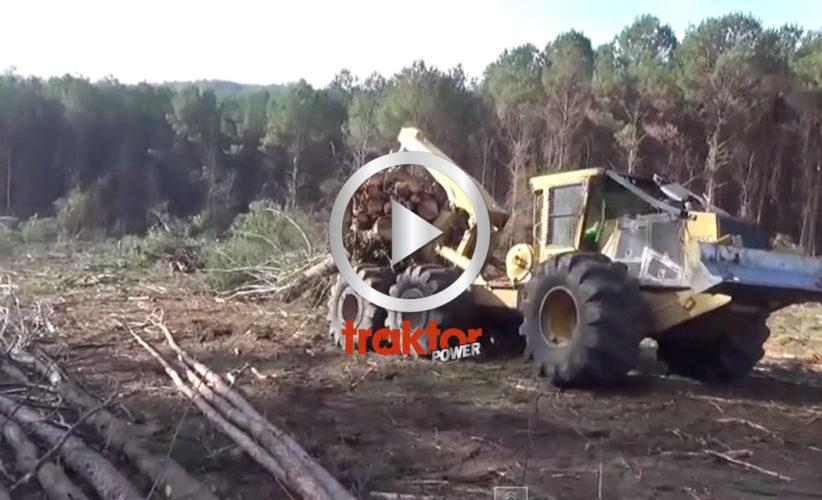 Skogens största Best!