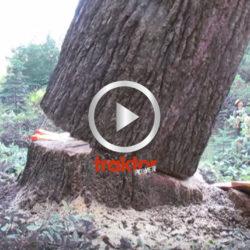 Träd faller långsamt!