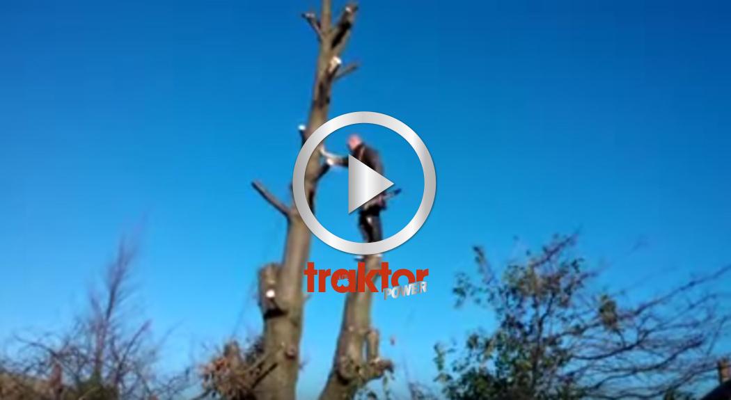 Man med motorsåg kapar träd på säkert sätt!!!