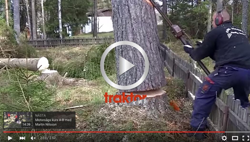 KOLLA hur den här killen fäller trädet! Tvärsäkert!!!